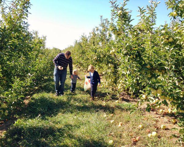 Adventures in apple picking.