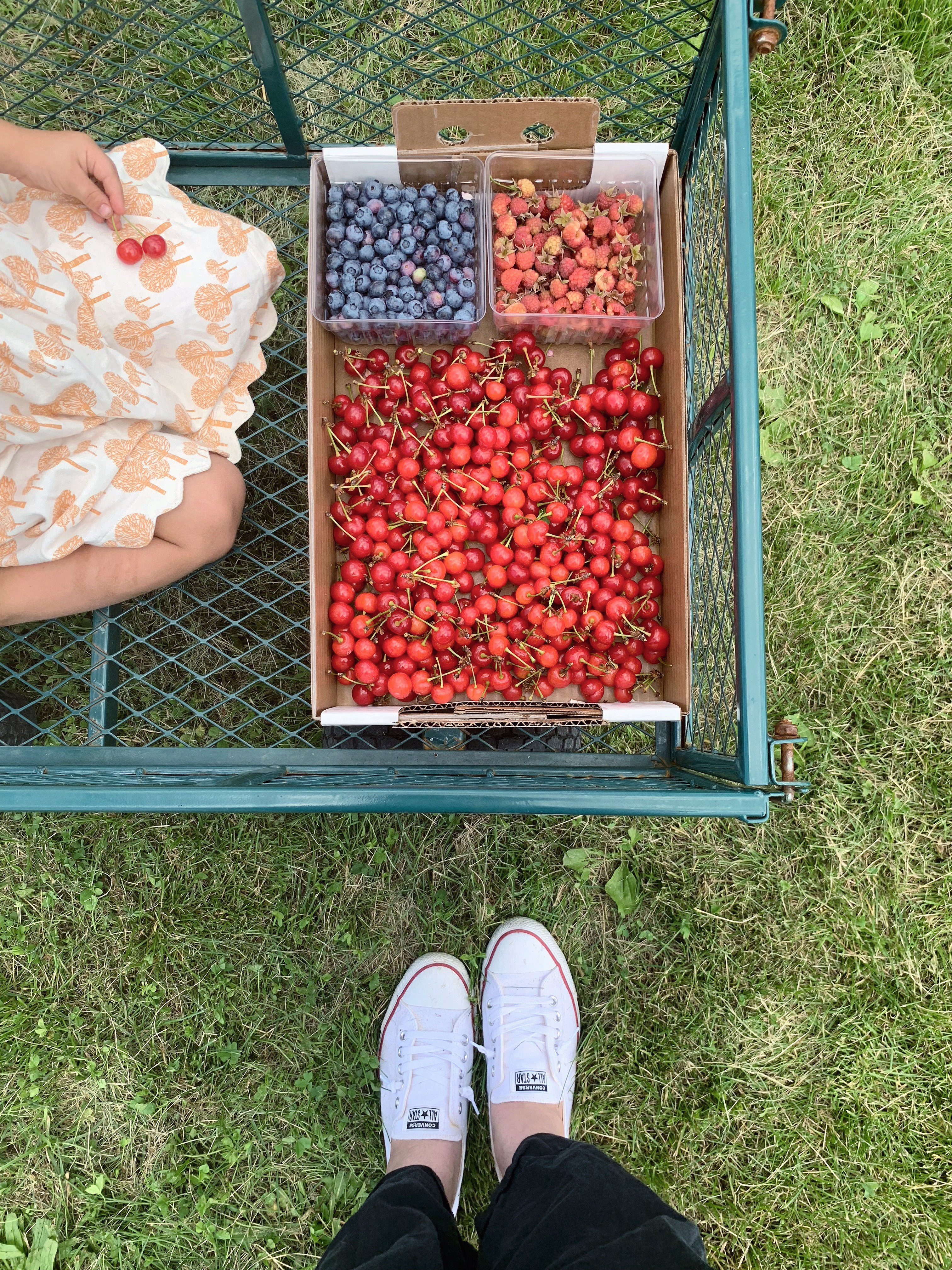 a day at the berry farm | mother of beees